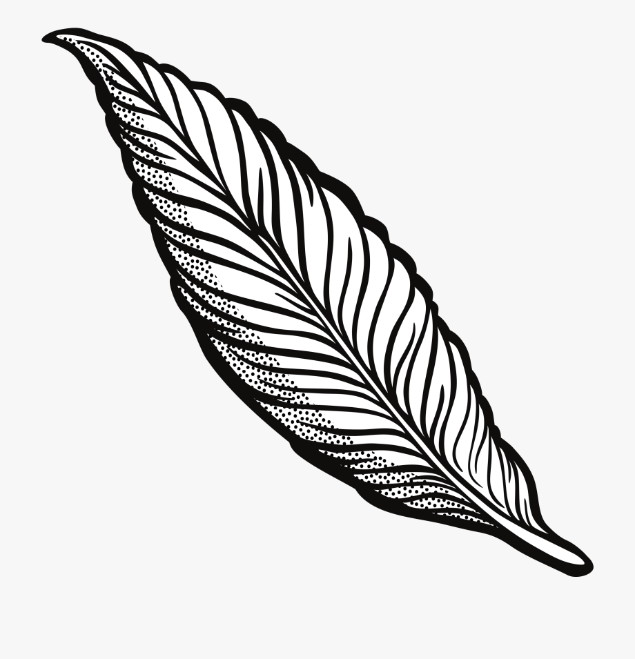 Turkey Feather Clipart Transparent Download Outline.