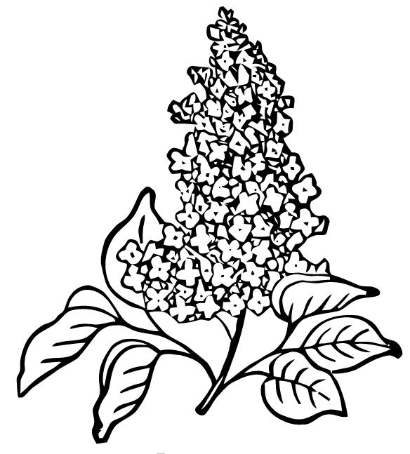 Free Vector Art: Lilac.