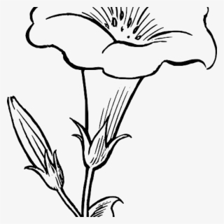 White Lily PNG, Transparent White Lily PNG Image Free.