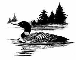 Image result for loon clipart black and white.