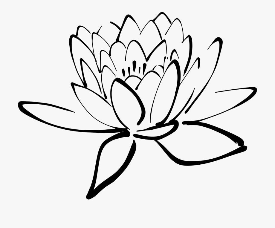 Tropical Drawing Lotus Flower.