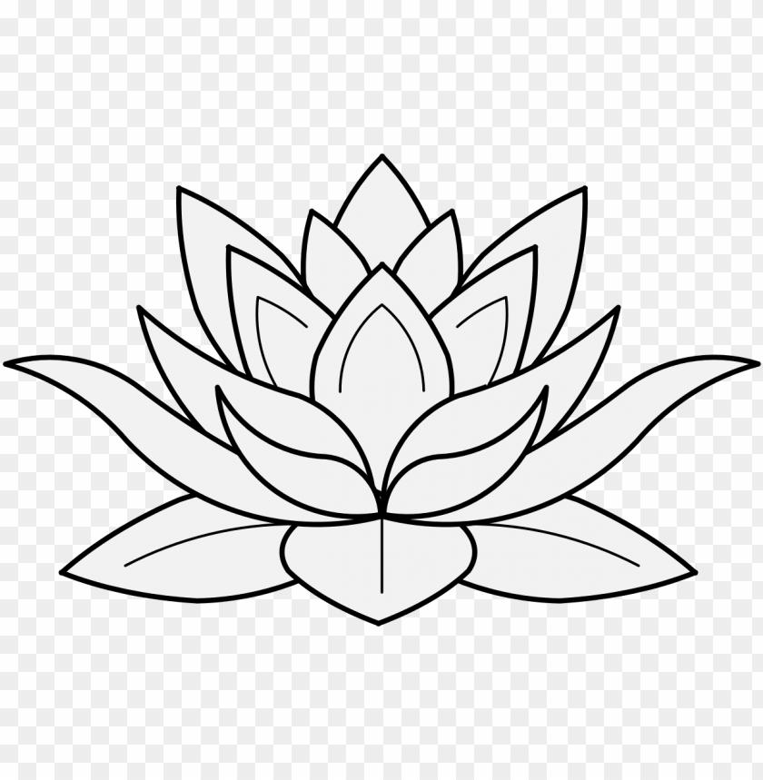 lotus flower in profile.