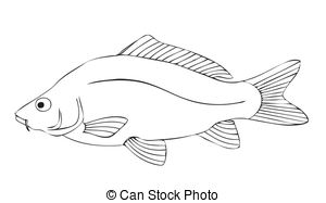 Perch, carp and bass fish isolated on white background for.