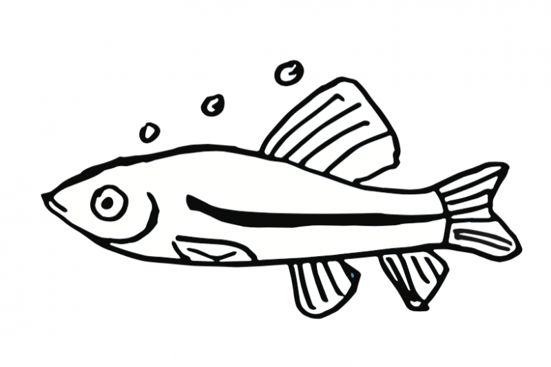 Black and white minnow clipart clipart images gallery for.