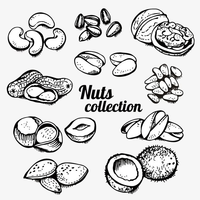 Hand Painted Roasted Nuts Vector Material, Pistachio, Cashew.