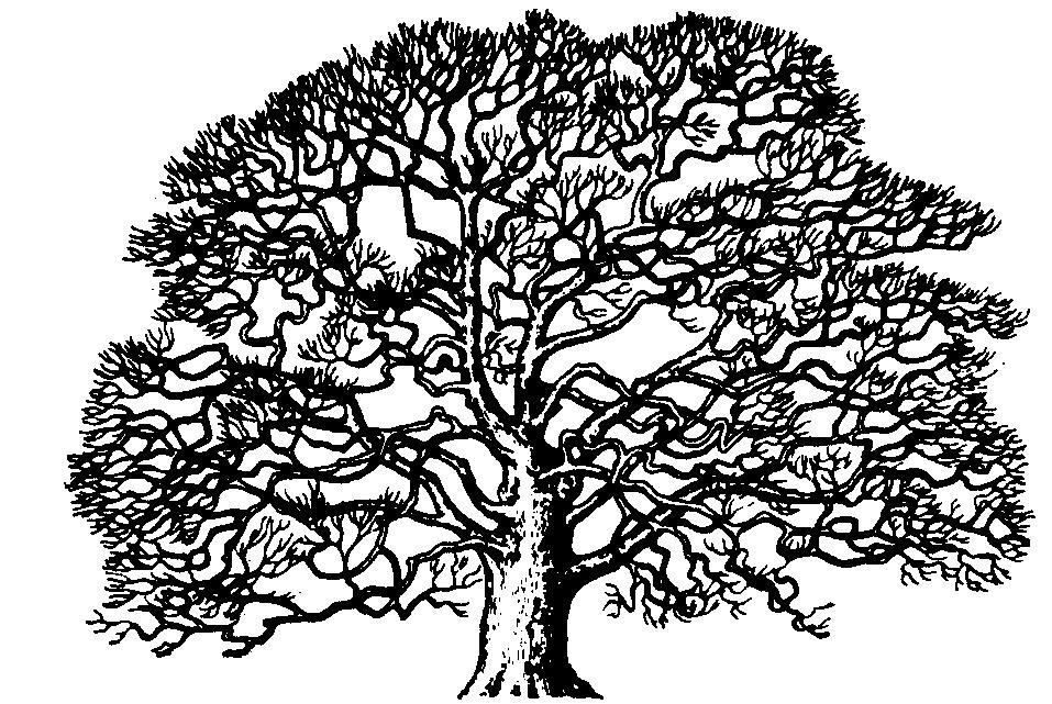 Oak Tree Clip Art Oak Tree Clip Art Black White Oak Tree Oak.
