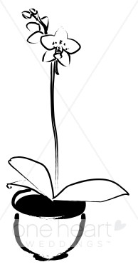 Black and White Potted Phalaenopsis Orchid Clipart.