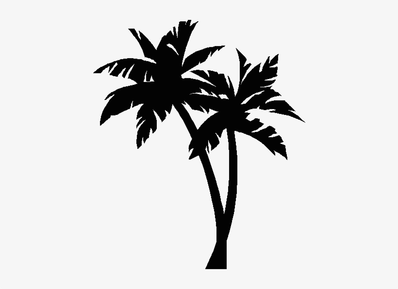 Picture Palm Tree.