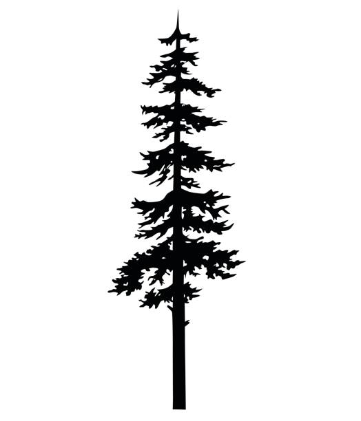 Best Pine Tree Illustrations, Royalty.
