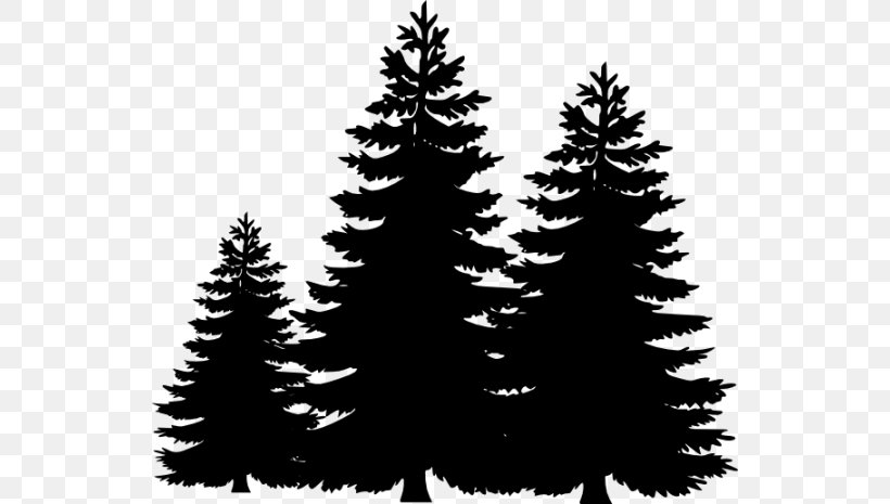 Pine Tree Silhouette Clip Art, PNG, 540x465px, Pine, Black.
