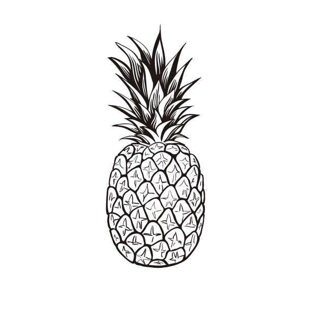 Best Drawing Of Black And White Pineapple Illustrations, Royalty.