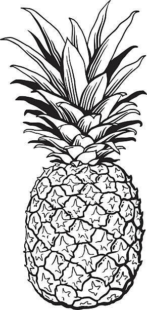 Best Black And White Pineapple Illustrations, Royalty.