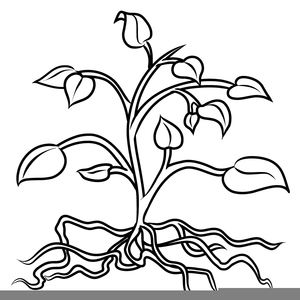 Plants Black And White Clipart.
