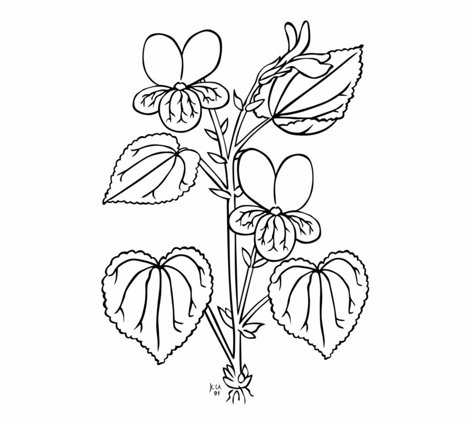 Plants Root Flowering Plant Violet.