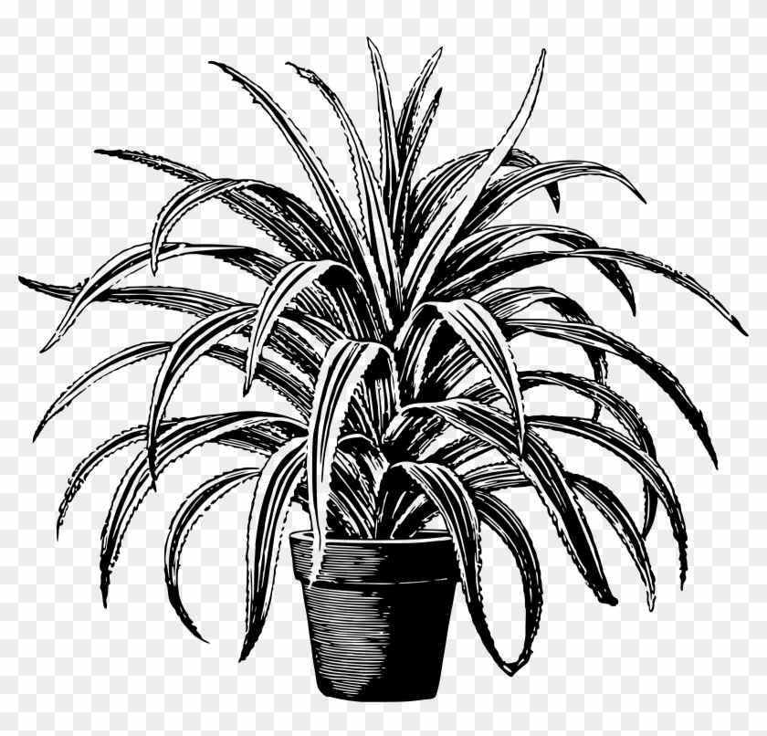 Potted Plants Clipart Short Tree.