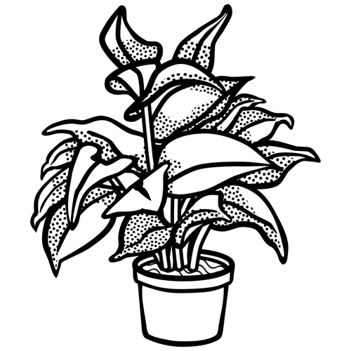 Plant Drawing Black And White.