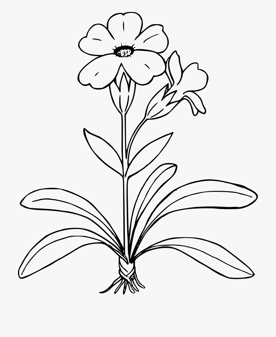 Plant Clipart Simple.