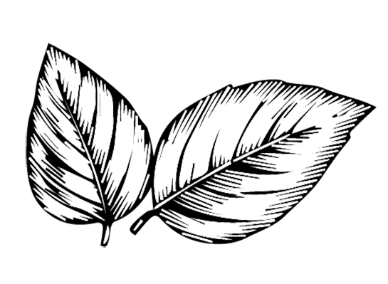 Png In Black And White & Free In Black And White.png Transparent.