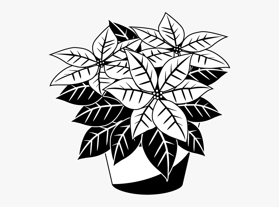 Poinsettias Clipart Manglik.