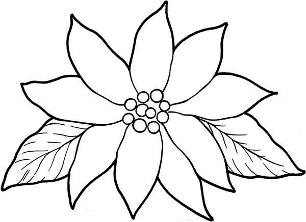937 Poinsettia free clipart.