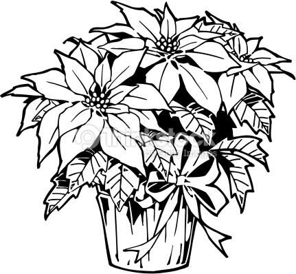 Poinsettia clipart black and white 1 » Clipart Station.