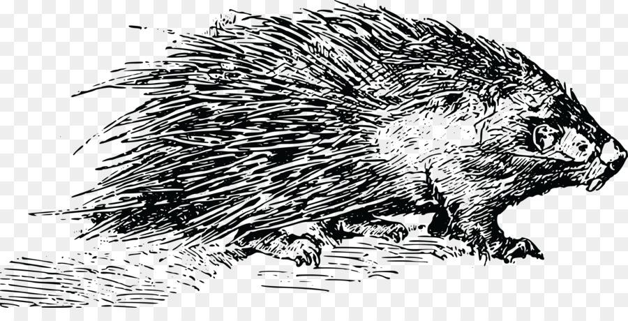 Beaver Cartoon.