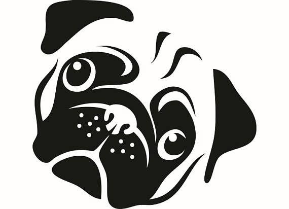Pug 2 Dog Breed K.