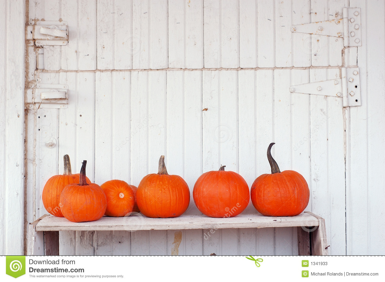 Pumpkins Row Stock Photos, Images, & Pictures.