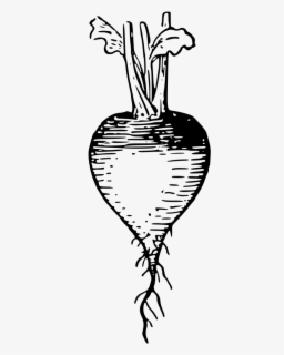 Free Radish Clip Art with No Background.
