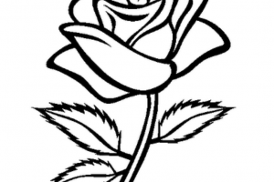 Black and white rose clipart » Clipart Portal.