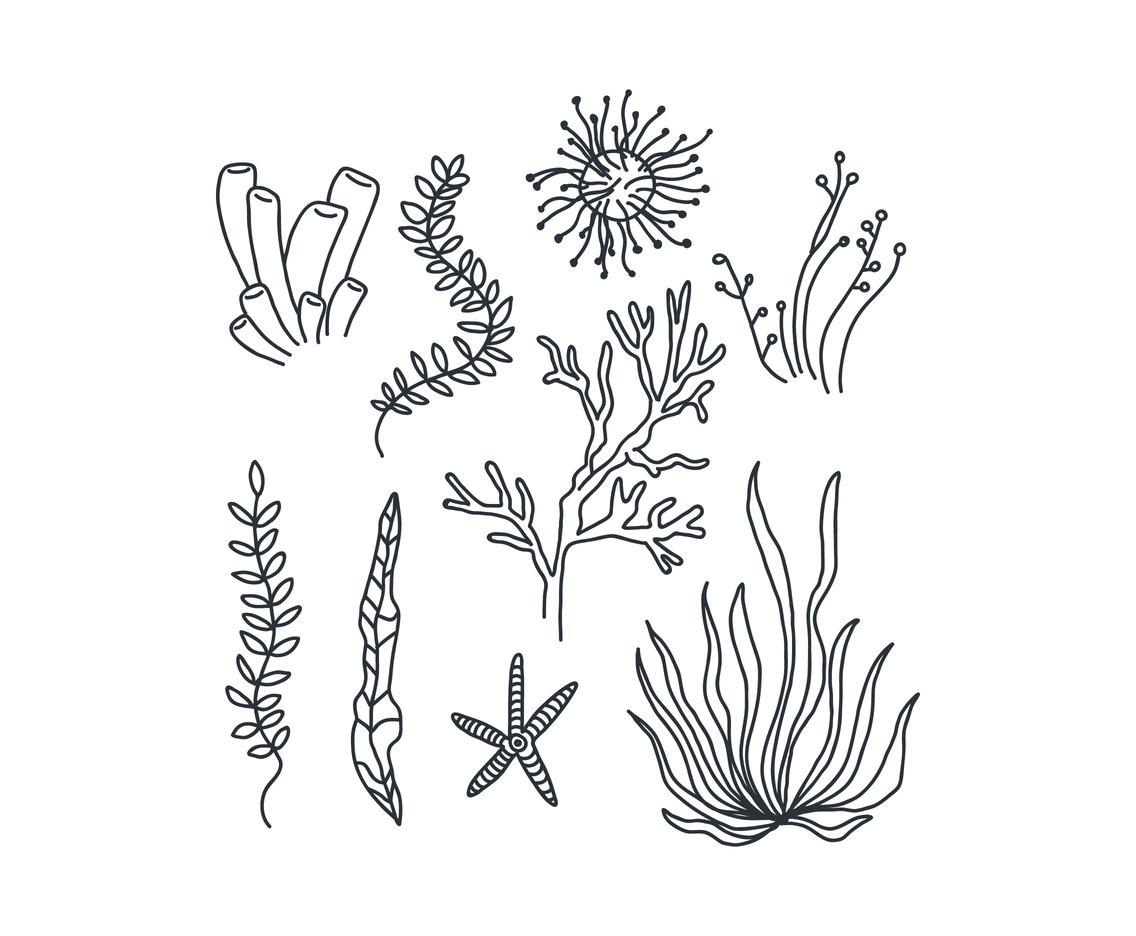 Black And White Seaweeds Vector Art & Graphics.