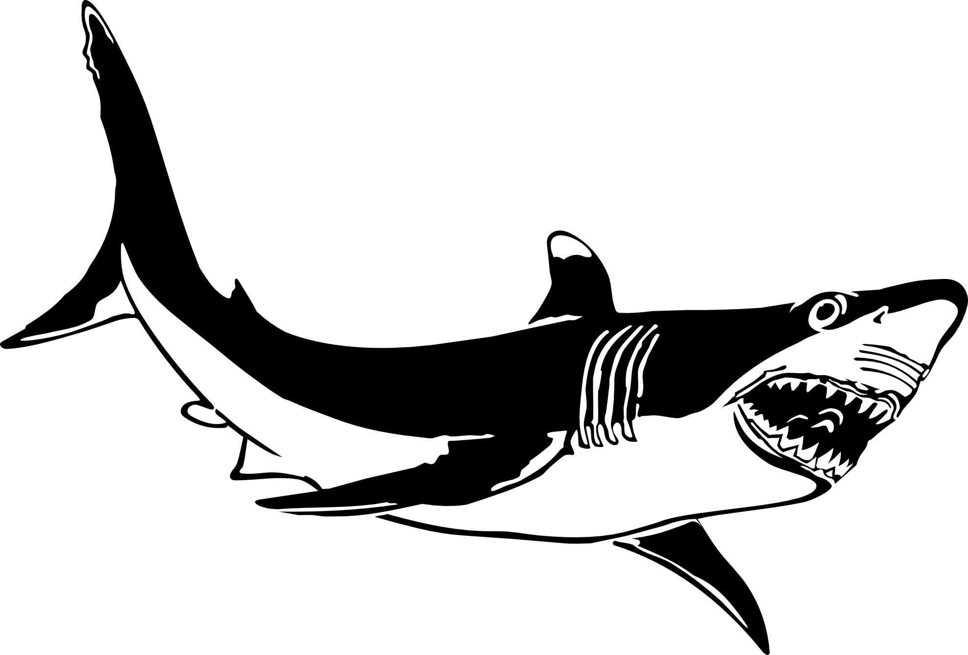 Free Black And White Shark Pictures, Download Free Clip Art.