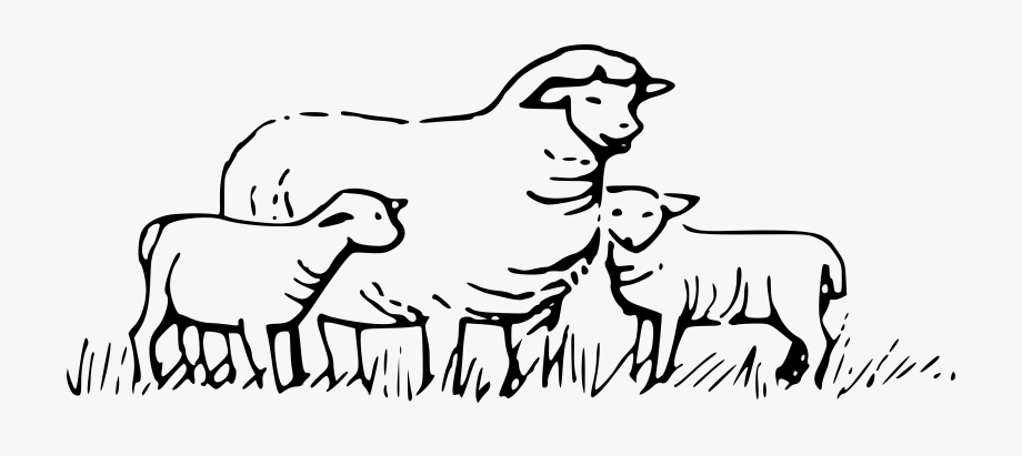 Black And White Sheep Clipart.