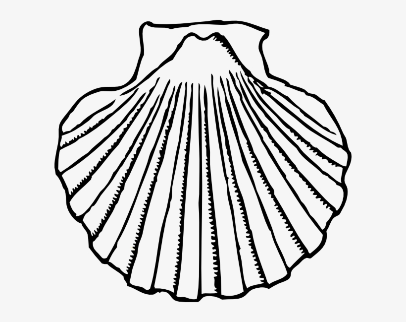 Seashell Shells Clipart Clipart.