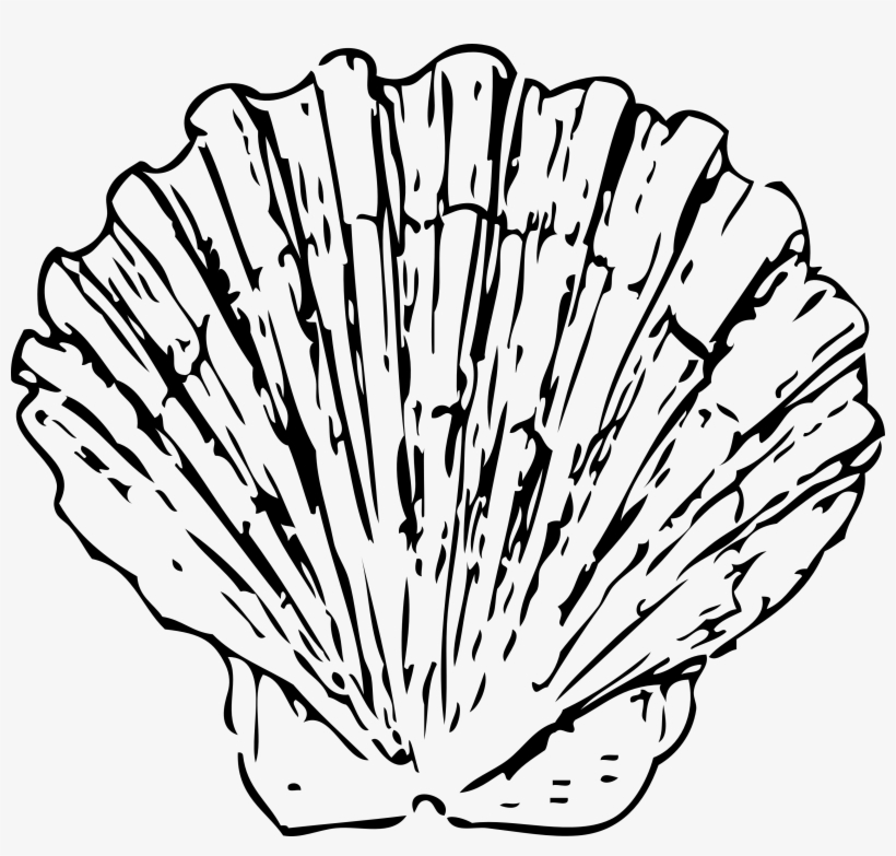 Conch Shell Clip Art.