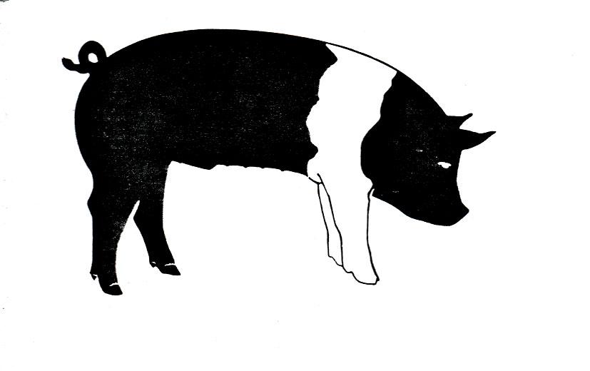 Show Pig Clipart.