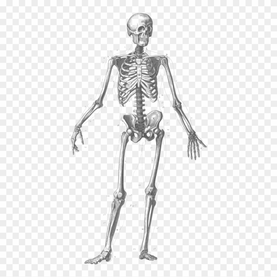 Free Skeleton Clipart Black And White Images Free Download.