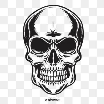 Human Skeleton PNG Images.