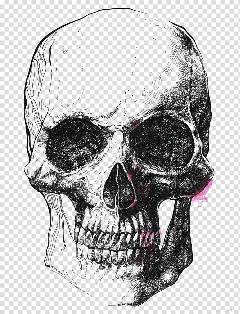 Skull sketch illustration, Human skull symbolism Drawing Skeleton.