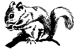 Free black and white squirrel clipart.