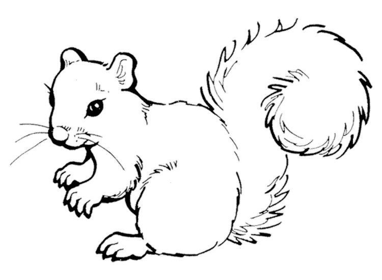 Cute squirrel clipart black and white 4 » Clipart Portal.