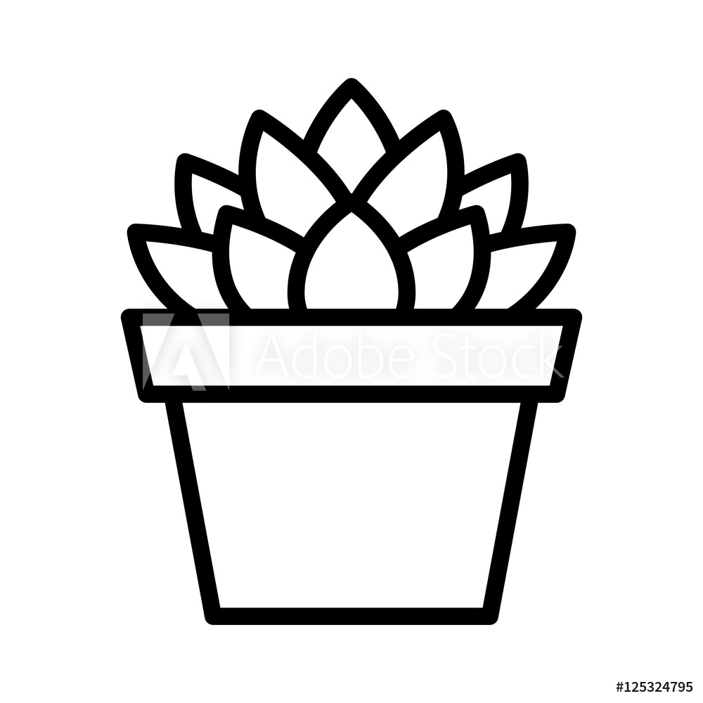 Photo & Art Print Haworthia Cooperi succulent potted plant.