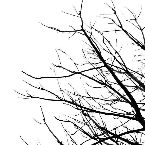 Free Tree Branch Black And White, Download Free Clip Art.