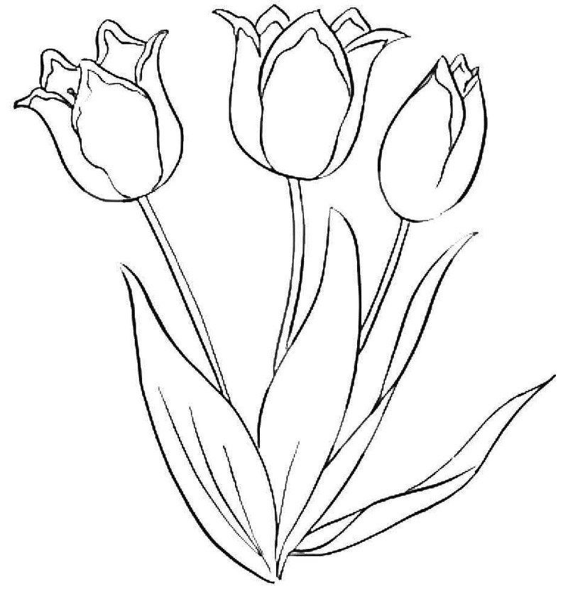 beautiful tulip flower coloring book.