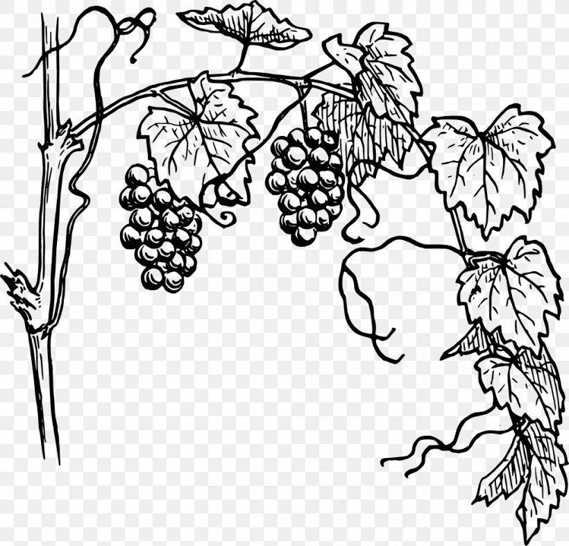 White Wine Vine Grape Clip Art, PNG, 1000x960px, White Wine.