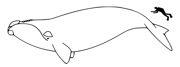 Free Black and White Whale Clipart, 1 page of Public Domain Clip Art.