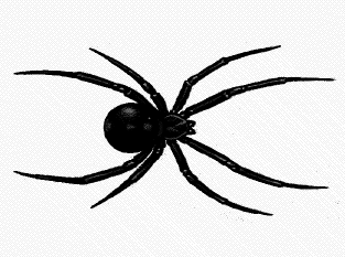 Cartoon Pictures Of Spiders.