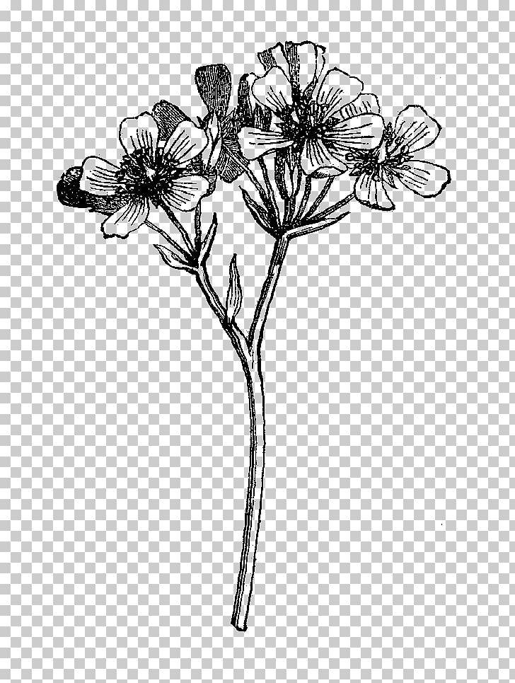 Black and white Wildflower Drawing, botanical flowers, black.