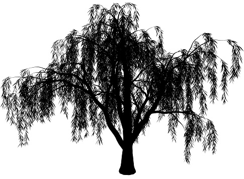 Black And White Willow Tree And A Fox Clipart.