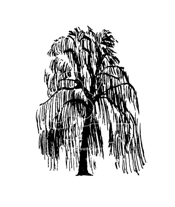 Black And White Willow Tree And A Fox Clipart Clipground